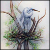 Egret in the Nest