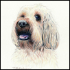 "LITTLE LABRADOODLE -- Artist: Tricia Anderson Size: 9"" x 12' Price: $275.00 ***SOLD***"