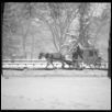 Carriage, Central Park Snowstorm