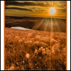 "PRAIRIE MORN' WAKE UP -- Artist: Jim Walker Size: 12"" x 28"" Price: SOLD"