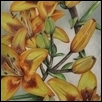 Yellow Lilies #3