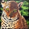 Green Eyed Jaguar
