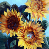 Grinter's Sunflowers I