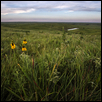 Flint Hills Evening II