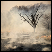 "TREE AT A PRAIRIE BURN -- Artist: Michelle Wade Size: 19"" x 25"" Price: $450.00"