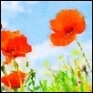 "ABSTRACT POPPIES AGAINST THE SKY -- Artist: Leah Lambart Size: 14"" x 11"" Price: $250.00"