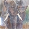 "AFRICAN ELEPHANT -- Artist: Charmaine Hirsch Size: 12"" x 16"" Price: $230.00"