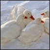 Family Togetherness in Snow