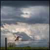 "BACKSIDE OF THE STORM -- Artist: Jill Haukos Size: 14"" x 11"" Medium: Photography Price: $200.00"
