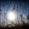 "WHAT THE GRASS SEES -- Artist: Jill Haukos Size: 14"" x 11"" Medium: Photography Price: $175.00"