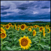 "LOOKING FOR SUN -- Artist: Ken Stafford Size: 40"" x 20"" Medium: Photography Price: $220.00 ***SOLD***"