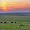 Grazing at Tallgrass at Sunset