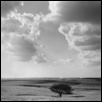 Tree, Cumulus Clouds, Geary Co., Kansas