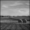 Soybean Field, Hay Bales, Douglas Co., Kansas